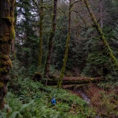 vancouver-island-old-growth